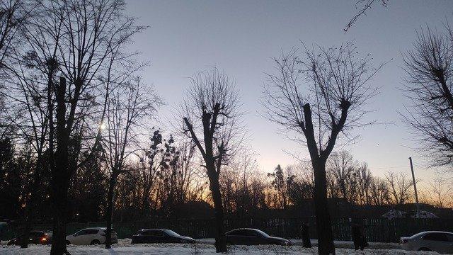 """Навіщо по Житомиру """"Зеленбуд"""" масово зрубує дерева?"""