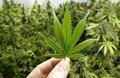 На Житомирщині розслідують три факти незаконного зберігання наркотиків