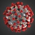 За минулу добу на Житомирщині зареєстровано 2 летальних випадки від коронавірусу