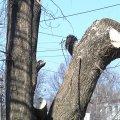 У селі поблизу Житомира рятувальники зрізали аварійні дерева, які хитались та тріщали