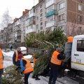 У Житомирі триває прийом новорічних дерев на утилізацію