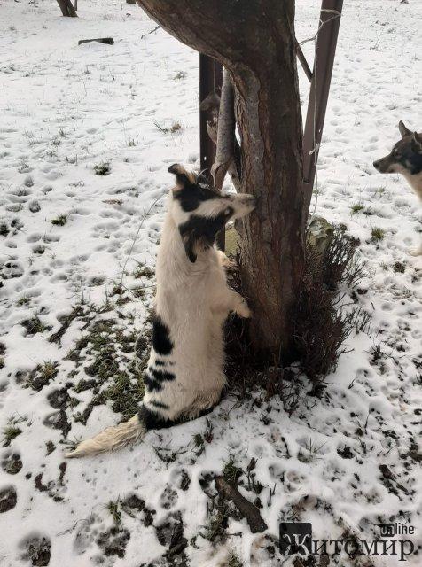В Житомире собаку привязали замерзать возле дерева. ФОТО