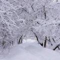 Житомир в среду возможно накроет снег