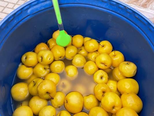 На Житньому ринку у Житомирі з'явилися квашені яблука. ФОТО