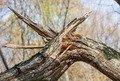 У Романівському лісгоспі унаслідок падіння дерев загинули двоє майстрів лісу