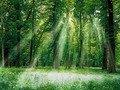 Україна започаткувала екологічну акцію, під час якої висадять 1 млн дерев по всьому світу