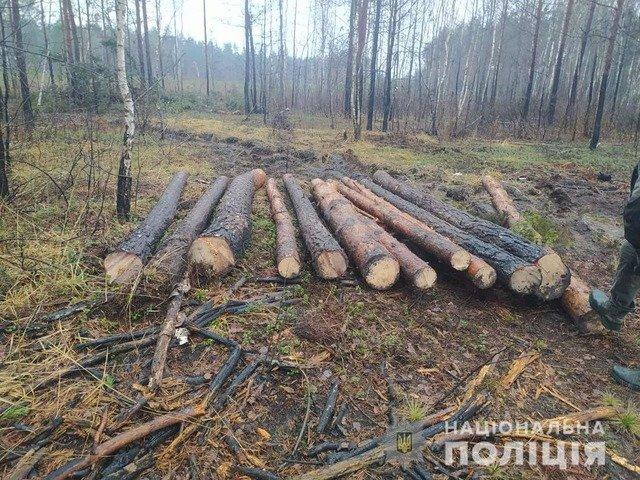На Олевщині затримали двох чоловіків, які перевозили нелегальну лісову продукцію. ФОТО