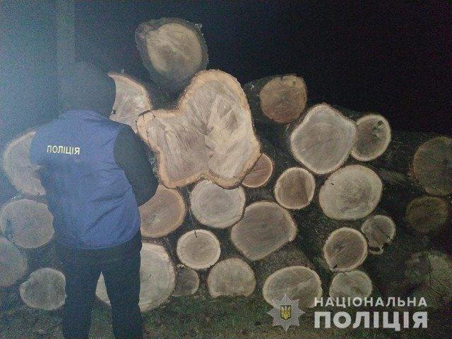 На Житомирщині викрили злочинну групу, яка вирубувала ліс. ФОТО