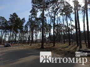 У Зарічанах зникає ліс. ФОТО