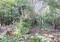 На Житомирщині лісівника звинувачують у службовій недбалості. ФОТО