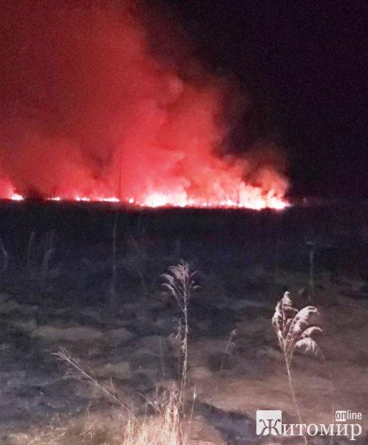 Біля Житомира рятувальники гасили займання сухої трави. ФОТО