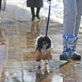 Завтра в Україну прийде весняне тепло, проте місцями - дощі