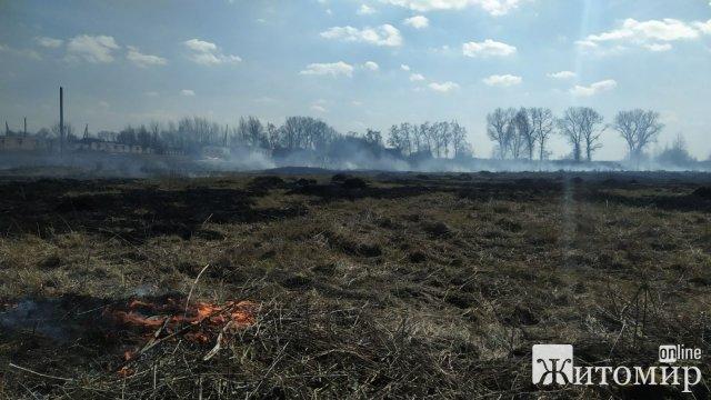 У Коростені та селі Народицького району рятувальники гасили займання сухостою. ФОТО