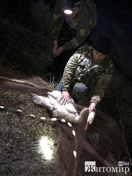На Житомирщині рятували лебедя, який потрапив у пастку. ФОТО