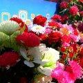 У Житомирі торгівля штучними квітами під забороною, продають живі. ВІДЕО