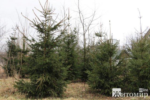 Наступного тижня у Житомирі з'явиться близько тисячі нових дерев. ФОТО