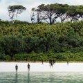 В Индийском океане находится самый загадочный остров в мире, который не смогут посетить даже самые экстремальные путешественники. ВИДЕО