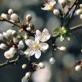 В Україну йде справжня тепла весна: синоптики назвали дату
