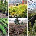 У Житомирі готуються висадити тисячу дерев за один день