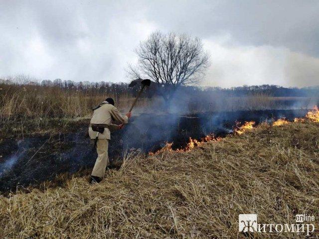 У Любарському районі горіла суха трава: через сильний вітер вогонь наближався до лісу. ФОТО