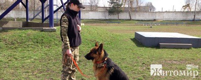 У Житомирі кінологи здавали випускні іспити: шукали злочинців та демонстрували дресуру собак. ФОТО