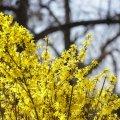 Сьогодні в Житомирі буде сонячно та тепло