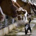 Україна подвоїла імпорт молочних продуктів
