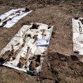 У Пулинському районі на глибині 50 метрів пошуківці знайшли рештки чотирьох солдат. ФОТО