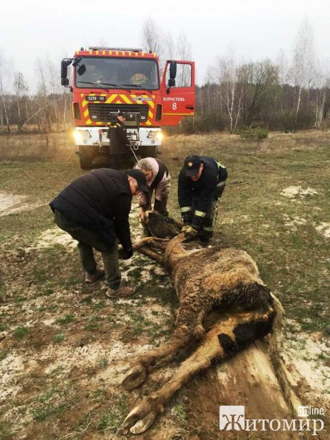 У Коростені рятувальники вивільнили з провалля тварину, яку шукали кілька днів. ФОТО