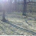 Один з лісгоспів у Житомирській області придбав і встановив камери відеофіксації. ФОТО