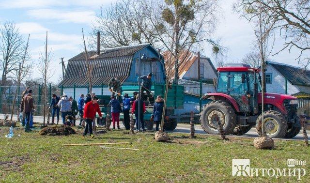 У селі Житомирської області скоро можна побачити масове цвітіння сакур. ФОТО