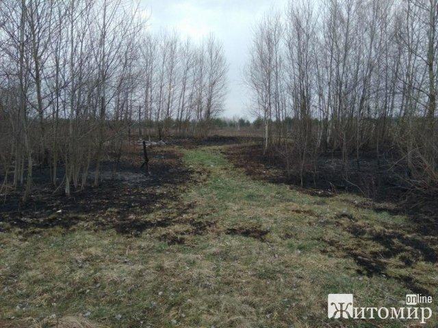 У Житомирському районі горіла суха трава. ФОТО