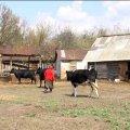 Жителі одного з сіл на Житомирщині розповіли про своє життя у Чорнобильській зоні відселення. ВІДЕО