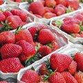 Рання полуниця може сильно нашкодити: кому її не можна їсти категорично