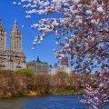 Весна в Центральном парке в Нью-Йорке. ВИДЕО