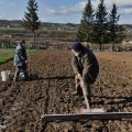 Знімає стрес і зміцнює імунітет: Комаровський розказав про користь садівництва
