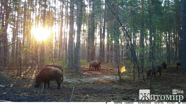 В одному з лісгоспів Житомирщини показали, хто мешкає в лісі. ФОТО