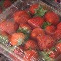 У Житомирі перевірили на вміст нітратів ранню українську полуницю. ВІДЕО