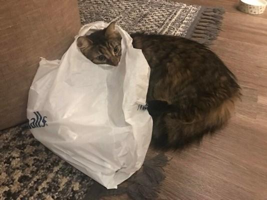 15 котиков, у которых случилось короткое замыкание