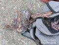 На Житомирщині чоловік вкрав телефонні дроти й залишив селян без зв'язку. ФОТО