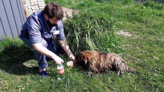 Небайдужі житомиряни вже рятують собаку, знайдену у стічній канаві. ФОТО