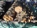 Жителя Романівщини викрили у незаконній порубці лісу. ФОТО