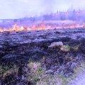 У Житомирському районі горіла суха трава: селяни побачили густий дім та сповістили рятувальників. ФОТО