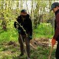 Жителі Житомира викопали 50 кущів борщівника в місцях відпочинку. ВІДЕО