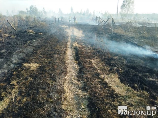 Через сильний вітер у Житомирському районі вогонь з сухої трави ледь не перекинувся на будинки. ФОТО