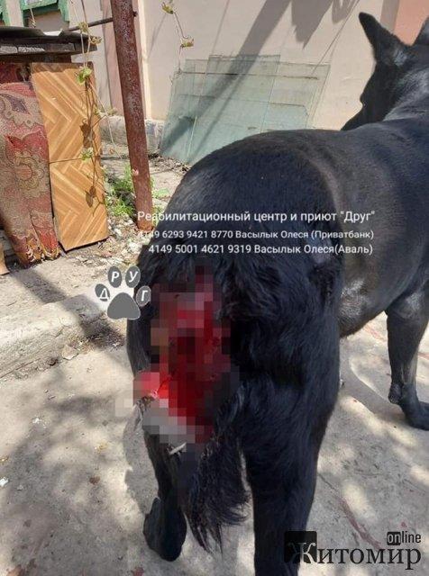 В Днепропетровской области женщина изрубила собаку ради мести экс-бойфренду