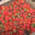 В яку ціну на житомирському ринку полуниця