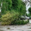На Князів Острозьких в Житомирі впало дерево і перекрило проїзд. ФОТО