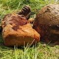 На Житомирщині чоловік пригадав, що минулого року знайшов каску з черепом та повідомив пошуківцям. ФОТО