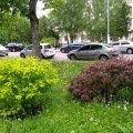 На Старому бульварі в Житомирі квітнуть дерева та кущі. ФОТО